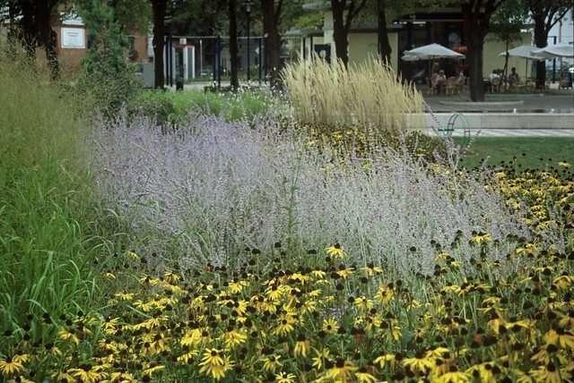 Les plantes vivaces apportent une touche de couleur aux espaces verts image