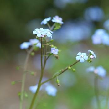 Top 10 des plantes aimant l'ombre