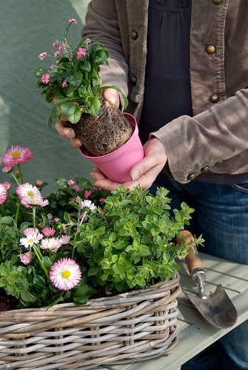 Planter des vivaces à l'automne ? Oui, certainement ! image