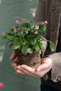 Planter des vivaces