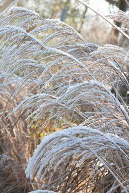 Graminées ornementales : des silhouettes au jardin image