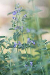 Les plantes vivaces ont un pouvoir de solution pour les conditions météorologiques extrêmes