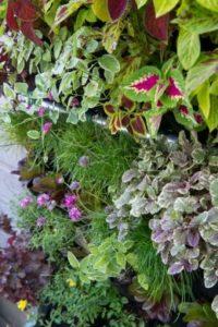 L'espace extérieur dont vous disposez est restreint? Optez pour le jardinage à la verticale