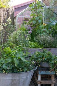 Un jardin potager facile avec des plantes vivaces