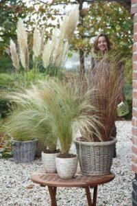 L'herbe de la pampa fait revivre votre jardin