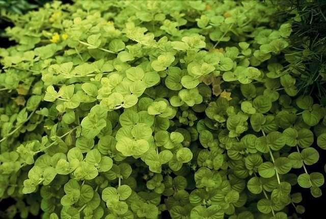 Le vert rend heureux image