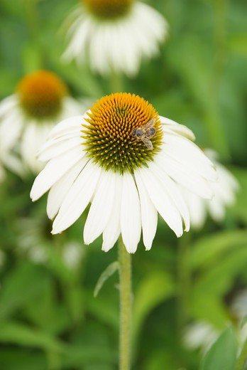Les plantes vivaces au soleil image