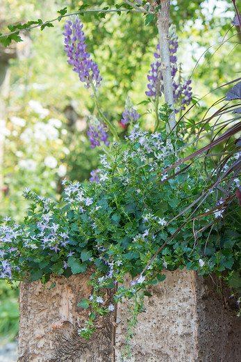 Les plantes vivaces se trouvent bien en pot image