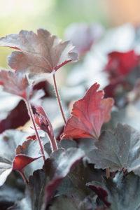 Les plantes résistant à l'hiver jardin