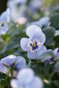Plantes vivaces à fleurs jardin