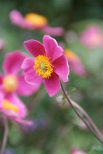 Plantes vivaces à floraison printanière