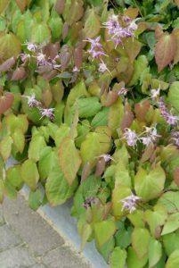 couvre-solet fleurs