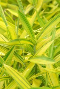 jardin plantes vertes