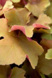 les plantes à feuillage