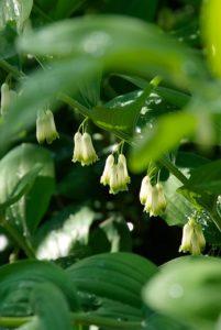 Top 10 schaduwplanten
