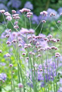 Séduire les papillons avec des plantes nectarifères