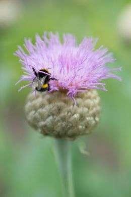 Transformez votre jardin en pré mellifère avec des vivaces