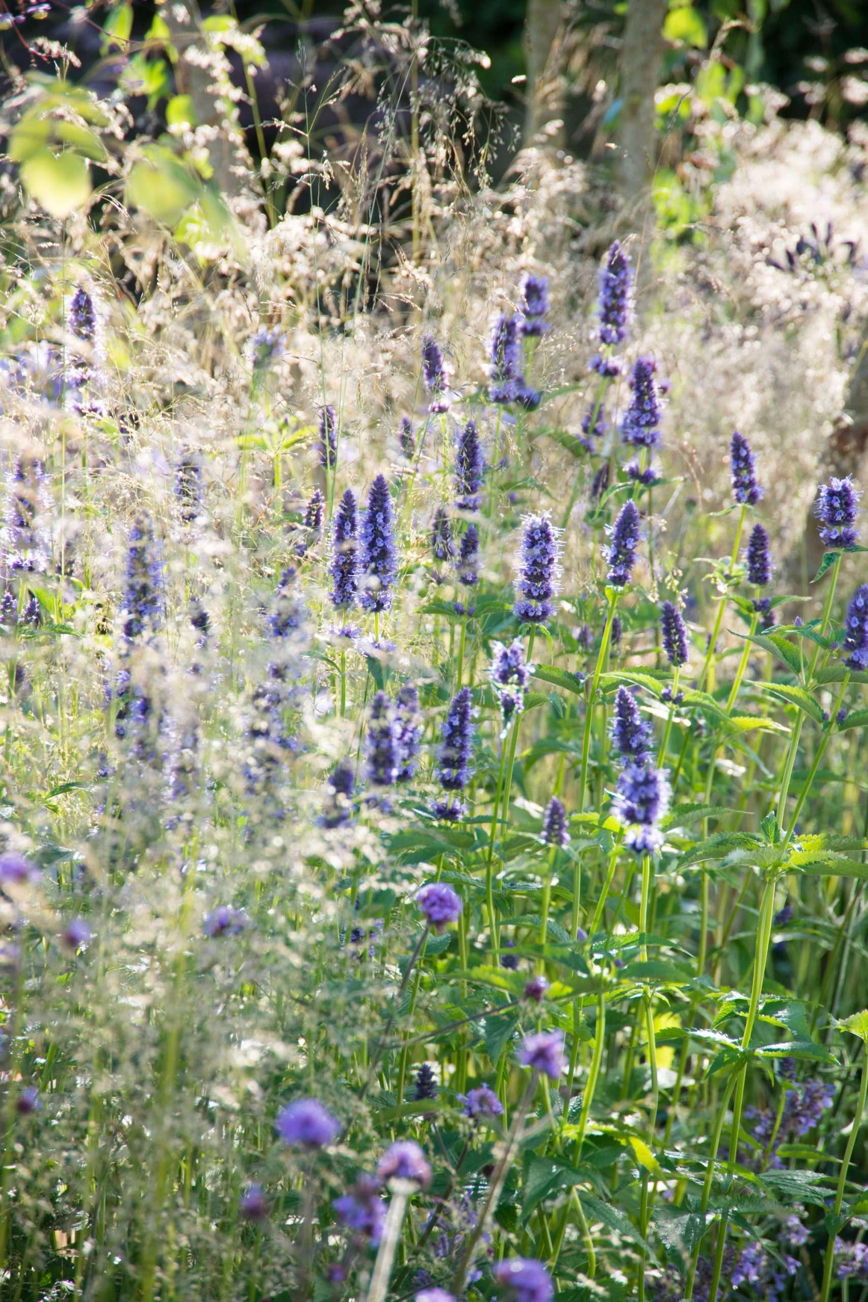 Nouvelle tendance en matière de jardinage : les plantes à tresser