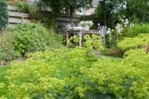 Comment fertiliser les plantes vivaces