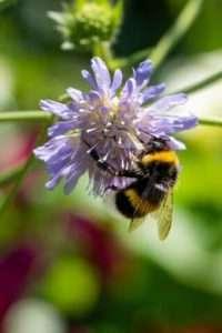 Les plantes vivaces sont excellentes pour la biodiversité: accueillez les papillons, les abeilles et les oiseaux !