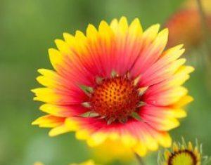 Les plantes ornementales: belles, mais pas seulement